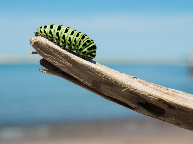 caterpillar-change