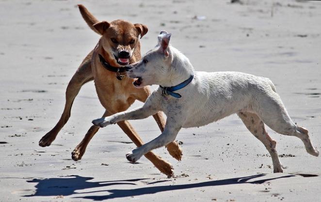 dogs-unfriendly