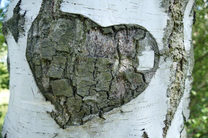 birch-heart