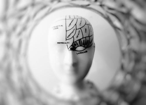 brain_img
